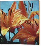 Tiger Lilies After The Rain - Painted Wood Print