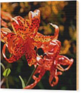 Tiger Lilies Wood Print by Rona Black