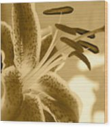 Tiger Lilly 2 Wood Print