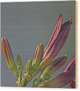 Tiger Lilly Buds 2 7172017  Wood Print
