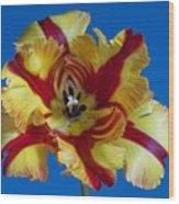 Tiger Lily 2 Wood Print
