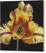 Tiger Lily 3 Wood Print