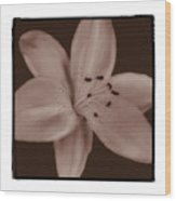 Tiger Lily 8 Wood Print