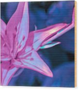 Tiger Lily Abstract Wood Print