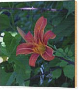 Tiger Lily In June 2018 Wood Print
