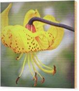 Tiger Lily. Wood Print