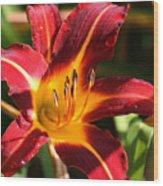 Tiger Lily0064 Wood Print