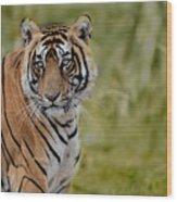 Tiger Look Wood Print