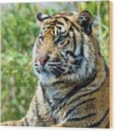 Tiger On Guard Wood Print