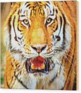 Tiger On The Hunt Wood Print