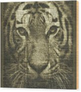 Tiger Over Dictionary Page Wood Print