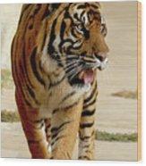 Tiger Pacing Wood Print