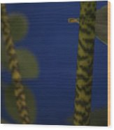 Tiger Plant I Wood Print