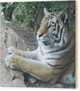Tiger Portrait Wood Print
