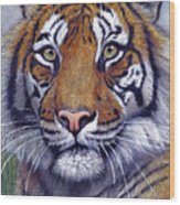 Tiger Portrayal Wood Print