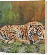 Tiger Repose Wood Print