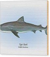 Tiger Shark Wood Print by Ralph Martens