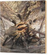 Tiger Spider  Wood Print