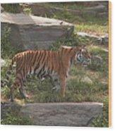 Tiger Stroll Wood Print