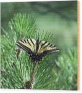 Tiger Swallow Tail Wood Print