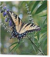 Tiger Swallowtail 1 Wood Print