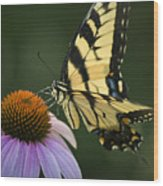 Tiger Swallowtail 1 Wood Print