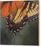 Tiger Swallowtail - 2 Wood Print