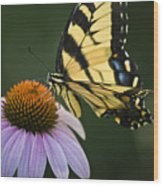 Tiger Swallowtail 2 Wood Print