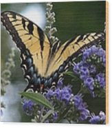 Tiger Swallowtail 3 Wood Print