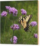 Tiger Swallowtail Among The Verbena   Wood Print