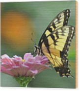 Tiger Swallowtail Butterfly Wood Print by Bill Cannon