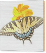 Tiger Swallowtail Butterfly, Cosmos Flower Wood Print