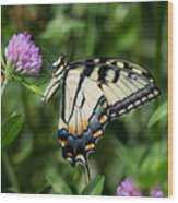 Tiger Swallowtail Butterfly Photograph By Jan M Holden