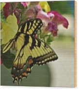 Tiger Swallowtail Butterfly On Begonia Bloom         June            Indiana Wood Print