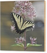 Tiger Swallowtail Butterfly On Common Milkweed 2 Wood Print