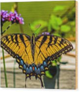 Tiger Swallowtail Butterfly By Fence Wood Print