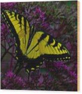 Tiger Swallowtail Wood Print