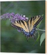 Tiger Swallowtail Female On Butterfly Bush Flowers Wood Print