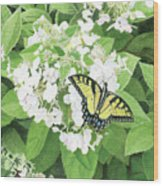 Tiger Swallowtail Wood Print