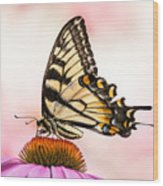 Tiger Swallowtail On Coneflower Wood Print