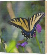 Tiger Swallowtail Painting Wood Print