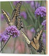 Tiger Swallowtails Wood Print