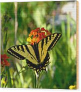 Tiger Tail Beauty Wood Print