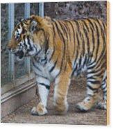 Tiger Territory 4 Wood Print