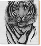 Tiger Tiger Wood Print