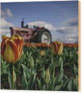 Tiger Tulip Wood Print