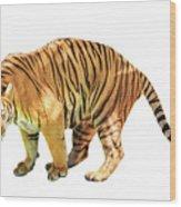 Tiger White Background Wood Print