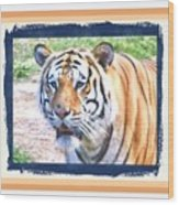 Tiger With Border Wood Print