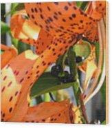 Tigerlilies Wood Print