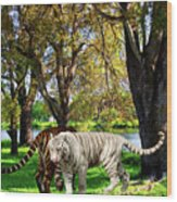 Tigers By The City Wood Print